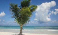 Malediwy, plaża, palma